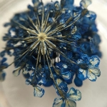 Сухоцвет Синий