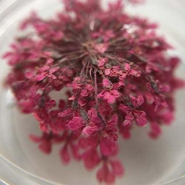 Сухоцвет Светло-малиновый
